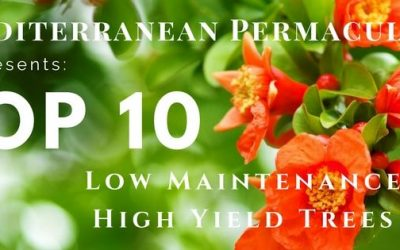 Top 10 Mediterranean Low Maintenance and High Yield Trees