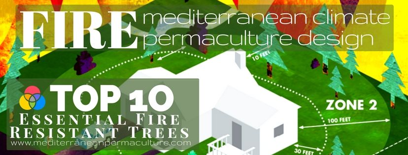 Top 10 Essential Mediterranean Fire Resistant Trees